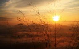 Здравствуйте! солнце Стоковые Изображения RF