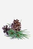 диаграмма сосенка 3 красивейшего рождества 3d габаритная иллюстрации очень Стоковые Изображения