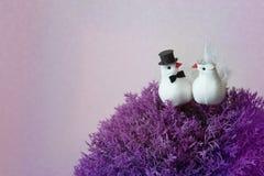 2 диаграммы белые голуби сидя на фиолетовом Буше Стоковые Изображения
