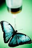 игла бабочки вниз Стоковые Фотографии RF