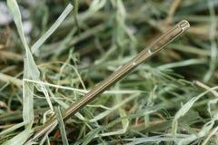 игла haystack Стоковые Фотографии RF
