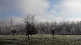 Иглы белые в утре стоковое фото rf