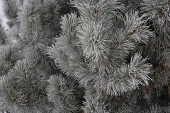 Иглы с изморозью стоковые фотографии rf