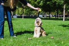 играть девушки собаки Стоковые Фото