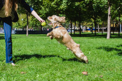 играть девушки собаки Стоковые Изображения