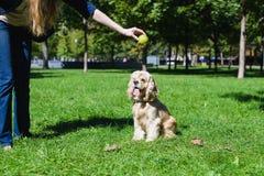 играть девушки собаки Стоковая Фотография