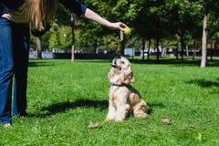 играть девушки собаки Стоковая Фотография RF