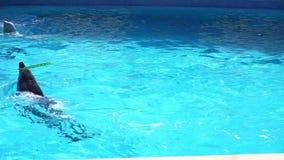 Играть дельфинов видеоматериал