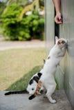 играть кота милый Стоковое Фото