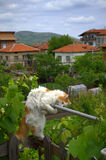 Играть кота на террасе Стоковое фото RF