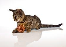 Играть кота, рождество Стоковые Фотографии RF