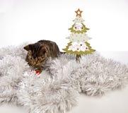 Играть кота, рождество Стоковые Изображения RF