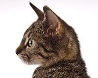 Играть кота, рождество Стоковое фото RF