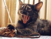 играть кота Стоковое Изображение