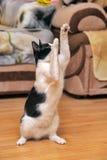 Играть кота Стоковое Фото
