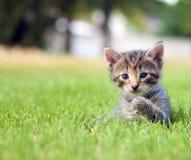 играть котенка травы Стоковые Фотографии RF