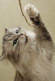 играть котенка Стоковое фото RF