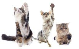 Играть котов стоковое фото rf