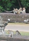 Играть обезьян Стоковые Изображения