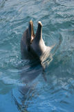 играть океана дельфина Стоковые Фото