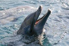 играть океана dolfins стоковое фото rf