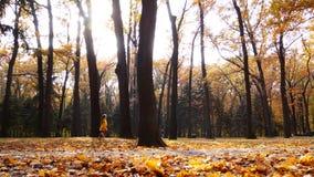 играть парка ребенка осени совмещать созданное различное изображение 3 hdr листва падения выдержек Внешняя потеха в осени акции видеоматериалы