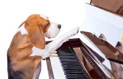 играть рояля собаки Стоковые Фотографии RF