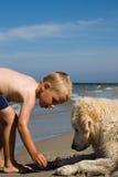 играть собаки мальчика пляжа Стоковое Изображение RF