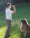 играть собаки шарика Стоковое Изображение RF