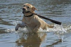 играть собаки Стоковое фото RF