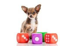 Играть собаки dices изолированный на белой предпосылке Стоковые Фото