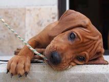 Играть с веревочкой Стоковое Фото