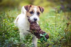 Играть с древесиной Стоковая Фотография
