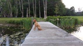 Играть с собаками Стоковое Фото