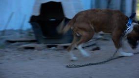 Играть с собакой на улице видеоматериал
