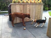 Играть 2 щенят Стоковое Изображение