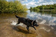 Играя собака на банке реки Стоковое фото RF