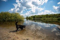 Играя собака на банке реки Стоковые Изображения RF