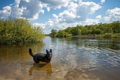 Играя собака на банке реки Стоковые Фото