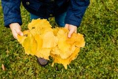 Игра детей в парке осени Дети бросая листья желтого цвета и красного цвета Маленькая девочка с лист совмещать созданное различное стоковые изображения