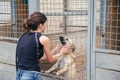 Игра женщины с бездомными собаками в укрытии животных Стоковое фото RF