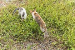 Игра кота в внешнем Стоковое Изображение