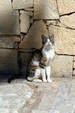 Игра кота около дерева Стоковое Изображение