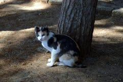 Игра кота около дерева Стоковые Фотографии RF