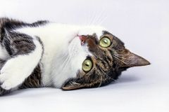 Игра кота стоковые фотографии rf