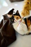 Игра кота Стоковое Изображение RF