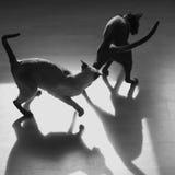 Игра кота Стоковое Изображение
