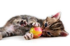 игра котенка шарика Стоковое Фото