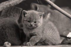 Игра котят среди ветвей стоковая фотография rf