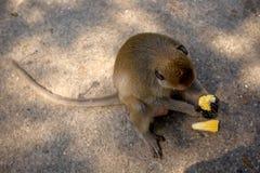 Игра обезьян и смотреть вокруг Стоковые Изображения RF